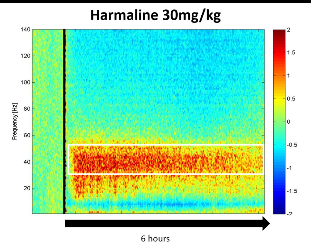 SynapCell-Harmaline-30-condition